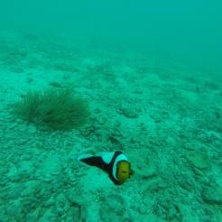 El papa Nemo me saluda