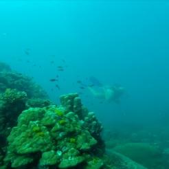 Inmersion profunda 3
