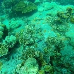 Inmersion profunda 4