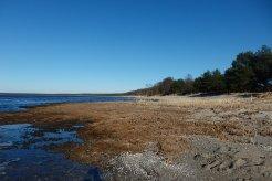 Golfo de Finlandia