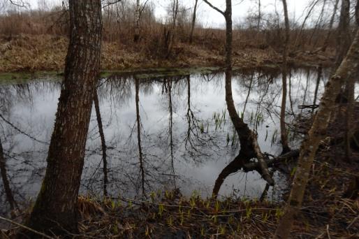 Lago Ülemiste