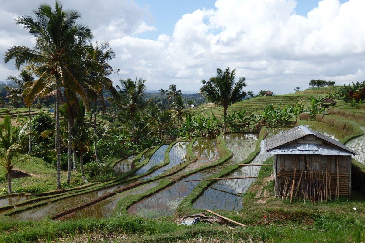Viaje a Bali 2