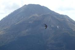 Volcan Batur