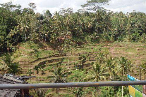 Terrazas arroz Ubud