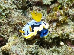 nudibranquio 3